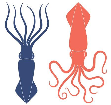 Squid illustration