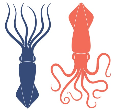 Squid illustration