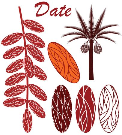 dates fruit: Date Illustration