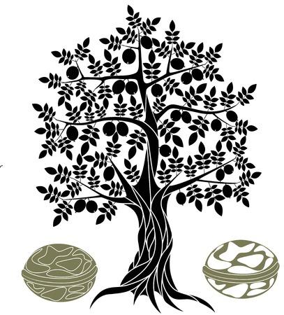 walnut tree: Walnut tree Illustration