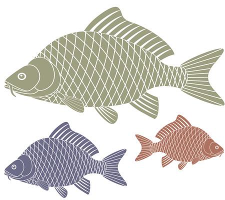 pez carpa: Carpa