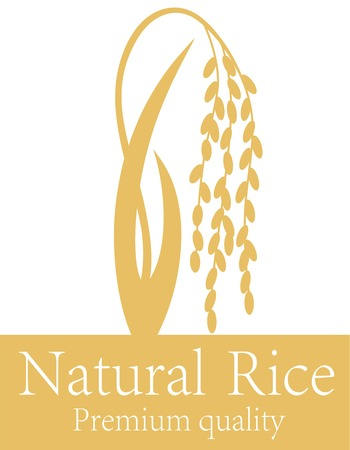 harvesting rice: Rice
