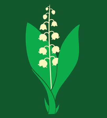 lily of the valley: Lily of the valley Illustration