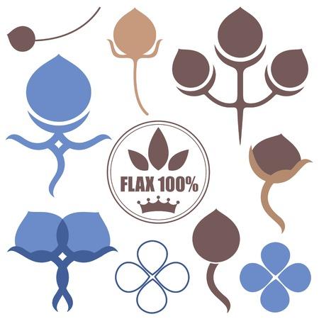 Flax Illustration