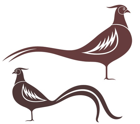 gamebird: Pheasant