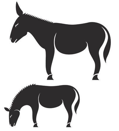jackass: Donkey Illustration