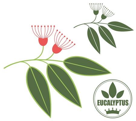 Eucalyptus Иллюстрация