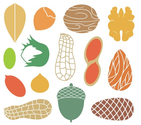 nut: Nut Illustration