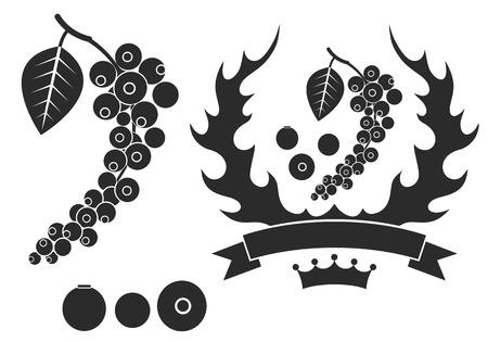 poivre noir: Le poivre noir