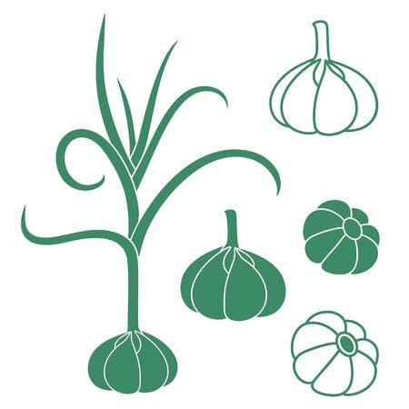 Garlic Reklamní fotografie - 37690252