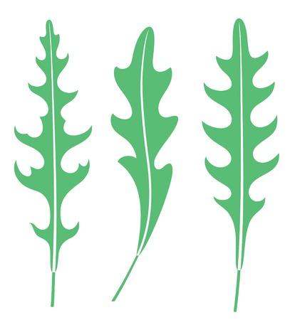 Arugula leaves Ilustracja