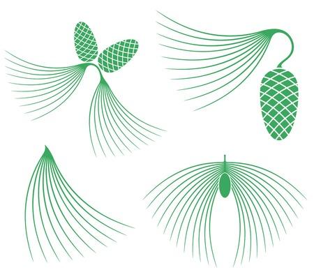 fir cone: Pine Illustration