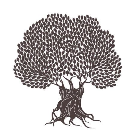 Eiche Baum Standard-Bild - 41779027