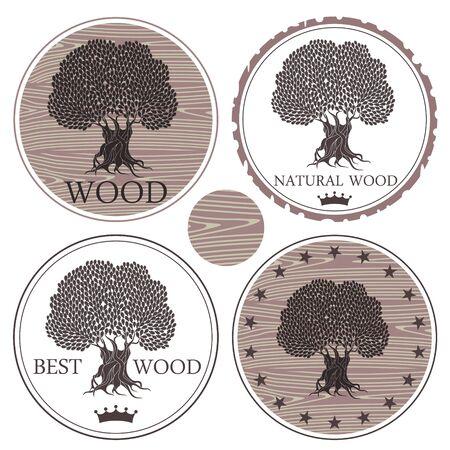 chestnut tree: Wood Illustration