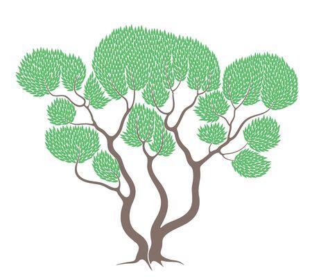 eucalyptus: Eucalyptus Illustration