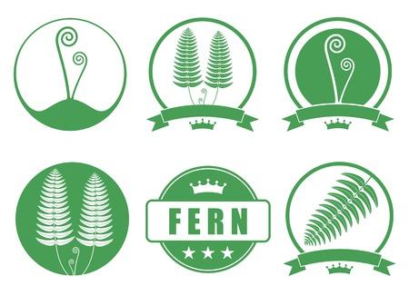 fern: Fern