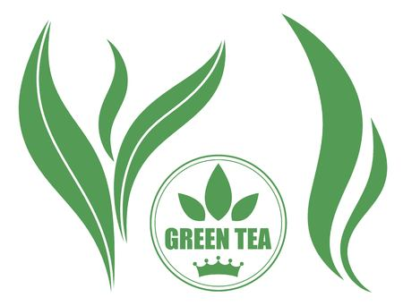 green tea leaf: Tea Illustration