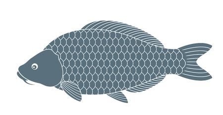 common carp: carp Illustration