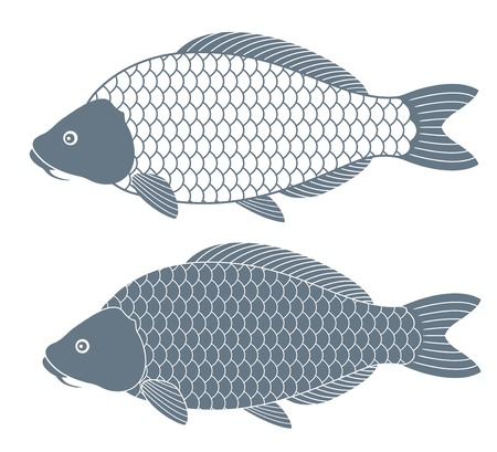 common carp: Carp Fish.