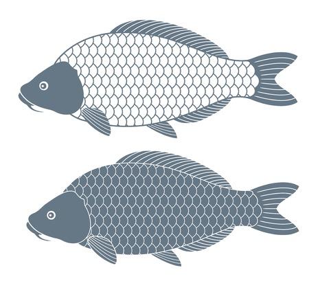 crucian: Carp Fish.