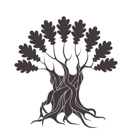 chestnut tree: oak tree Illustration