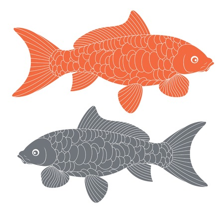 common carp: Koi Fish. Carp Koi Illustration