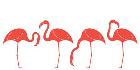 exotic birds: Flamingo. Exotic Birds