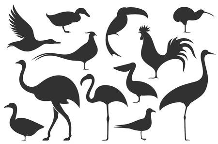Bird. Silhouette Illustration