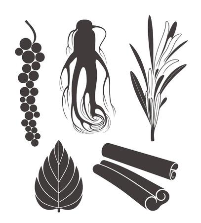 seasoning Illustration
