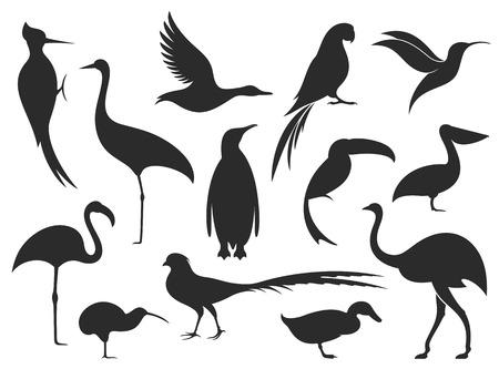Wildvogel. Vogel-Silhouette Standard-Bild - 73643663