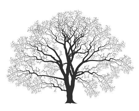 oak tree 向量圖像