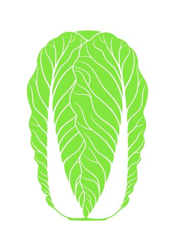 Chinese Cabbage. Isolated cabbage on white background Illustration