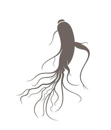 ginseng Illustration