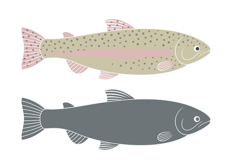 Rainbow trout. Isolated trout on white background