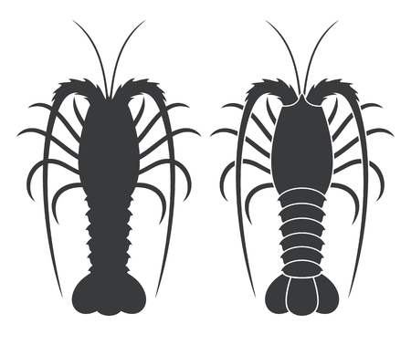 Spiny lobster. Illustration