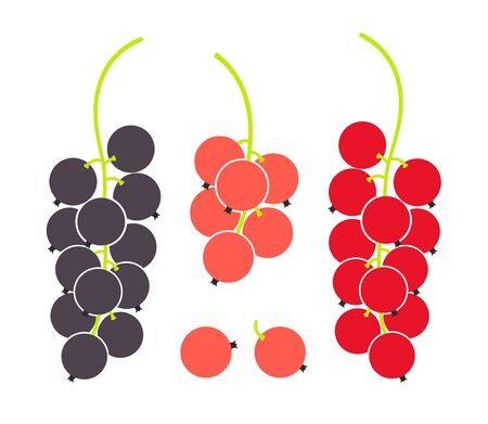 Currant fruit illustration.