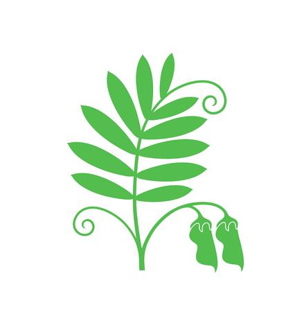 Linzen plant. Geïsoleerde linze op witte achtergrond Stock Illustratie
