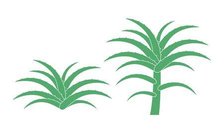 Aloe plant. Isolated aloe on white background Illustration