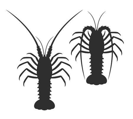 Spiny lobster silhouette isolated crab on white background.