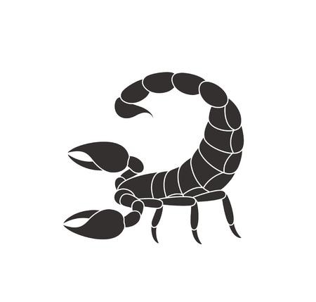 Isolated scorpion on white background