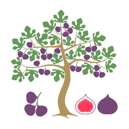 Fig tree Isolated fig on white background Illustration