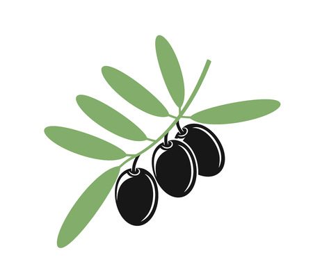 Olive branch. Isolated olive on white background Illustration