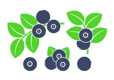 huckleberry Vector illustration on white background.  イラスト・ベクター素材