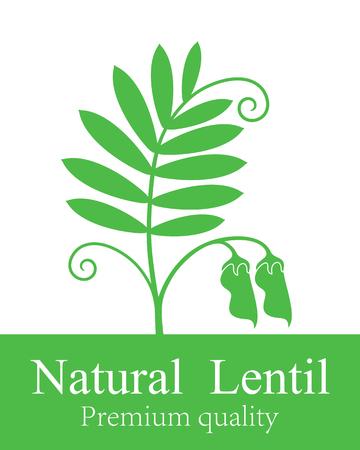 Isolated lentil on white background. Stock Illustratie