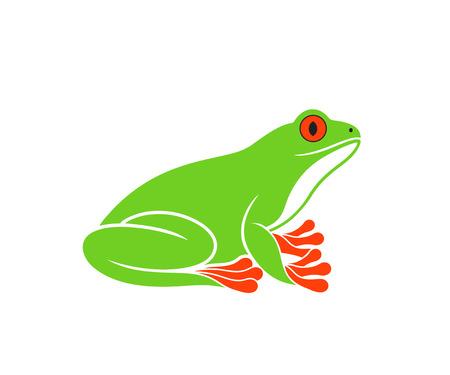 Red-eye frog isolated on white background. Illustration