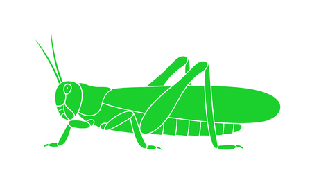 Grasshopper icon isolated on white background.