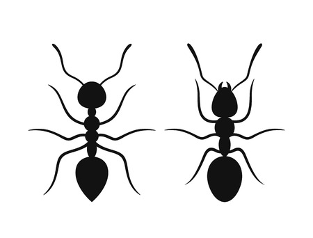 Ant silhouette graphics. Isolated ants on white background Ilustração