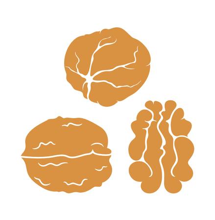 Walnut set. Isolated walnut on white background