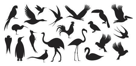 Dziki ptak. Sylwetka ptaka