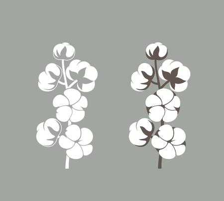 Planta de algodón. Algodón aislado sobre fondo blanco. Ilustración de vector